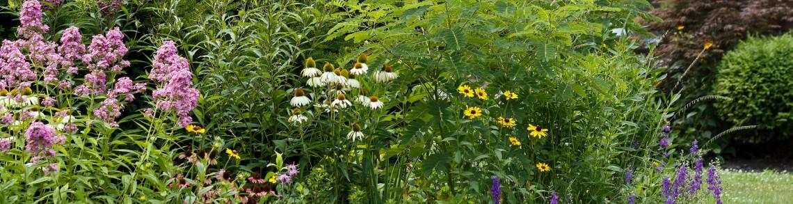 rain-garden-credit-tom-potterfield