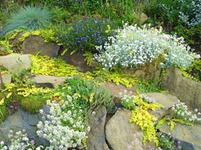 Stepable Rock Garden