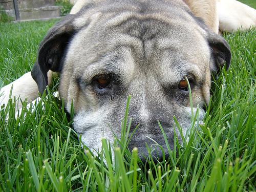 bare spots in lawn