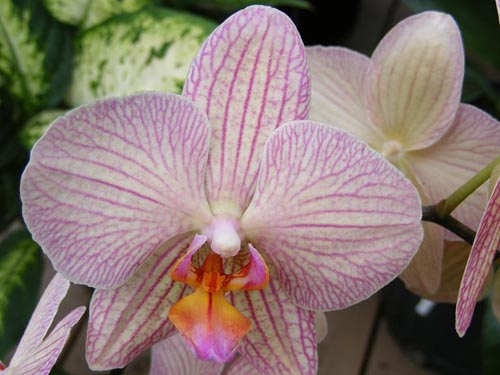 articles_2011_IMG_3814_orchid-31
