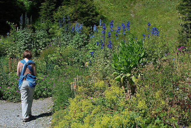 alpinum garden flickr