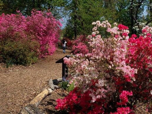 Arboretum-2342-1024