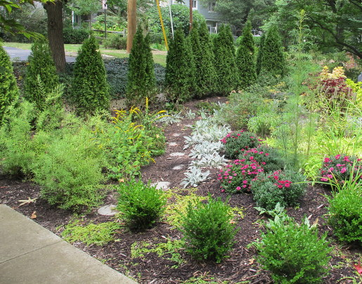 New Arborvitaes and Boxwoods in my front yard need a good fertilizer to stimulate more growth.