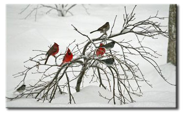 Winter Birds Photo By Larry Hurley