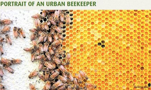 urban beekeeper2
