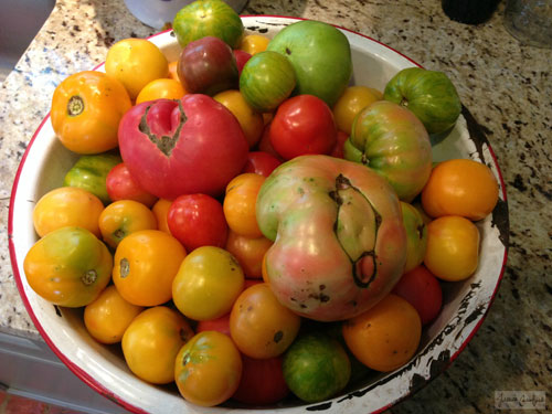 Life's a Basin Full of Tomatoes