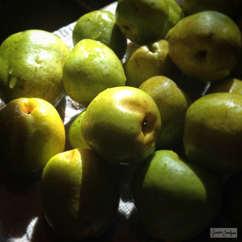 Quince-Ready-for-Chutney