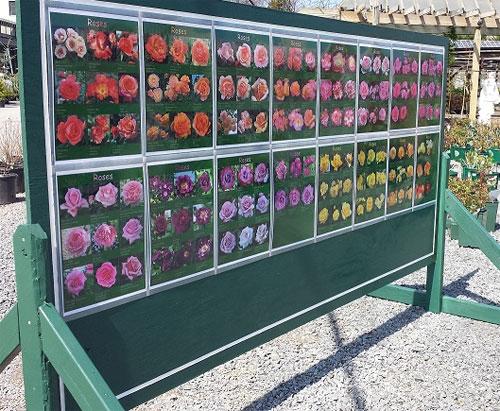 Behnke's-Rose-Variety-Sign,-present