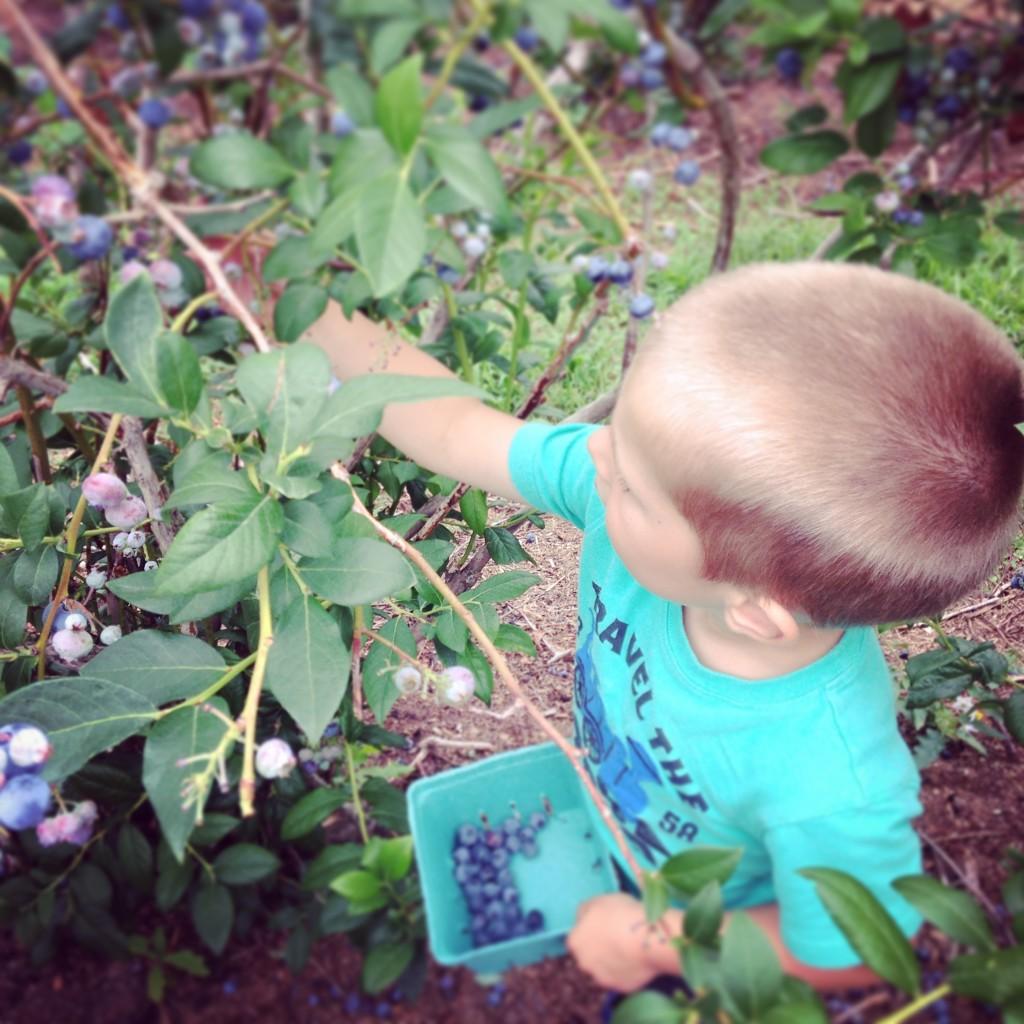 Grayson-at-blueberry-patch