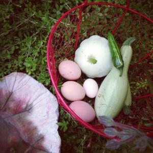 first-squash-harvest-300x300
