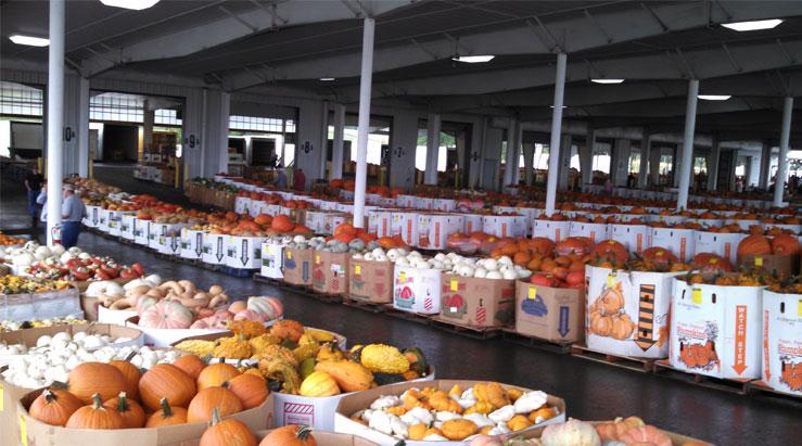 pumpkin-auction-1