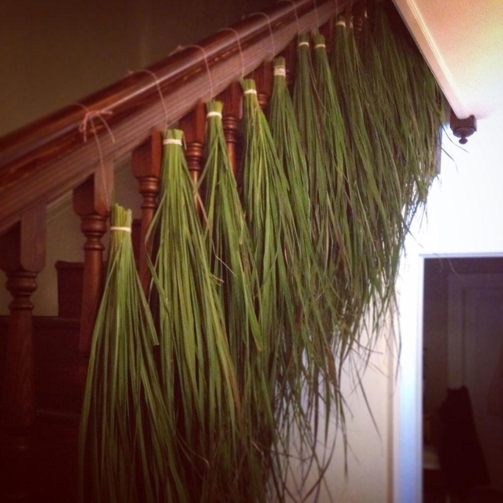 drying-lemongrass
