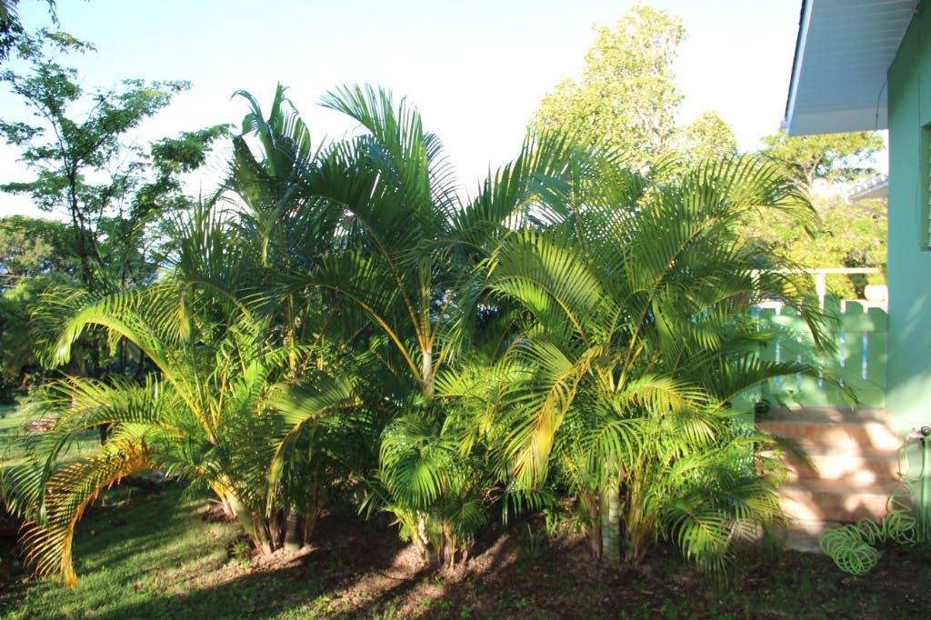 slow growing palms after 4 years