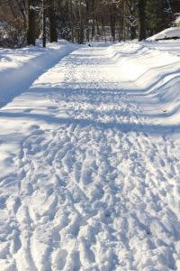Deer-Tracks-in-snow