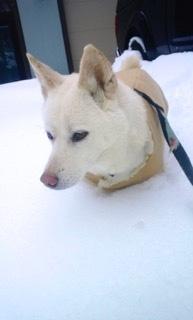 alice-in-snow