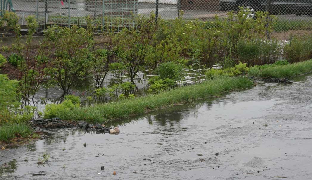 rain-garden-1