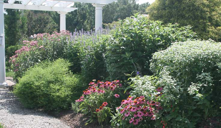 pollinator-garden-1