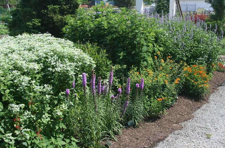 pollinator-garden-2