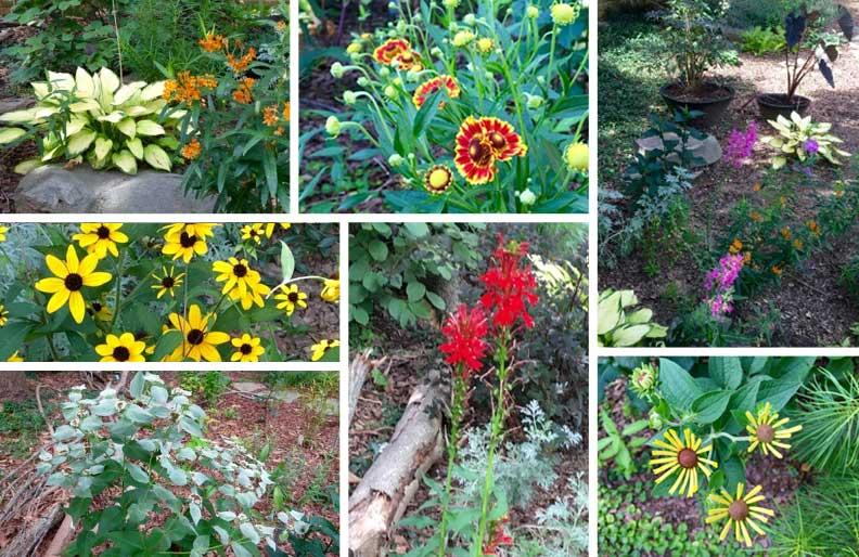 garden-collage-2