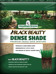 Black Beauty Dense Shade