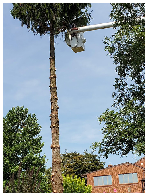 tree take down 2