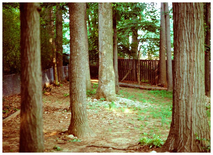 hurley back yard 1984