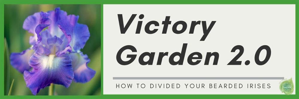 victory garden 2.0 bearded iris