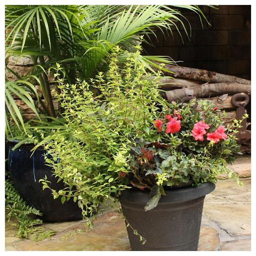 patio pot
