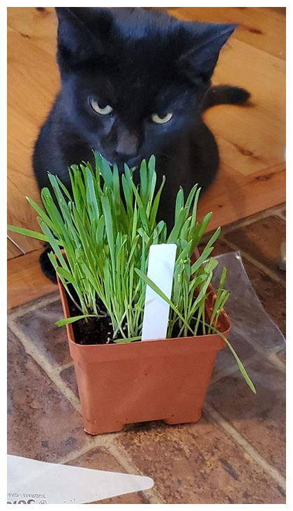 cat grass project