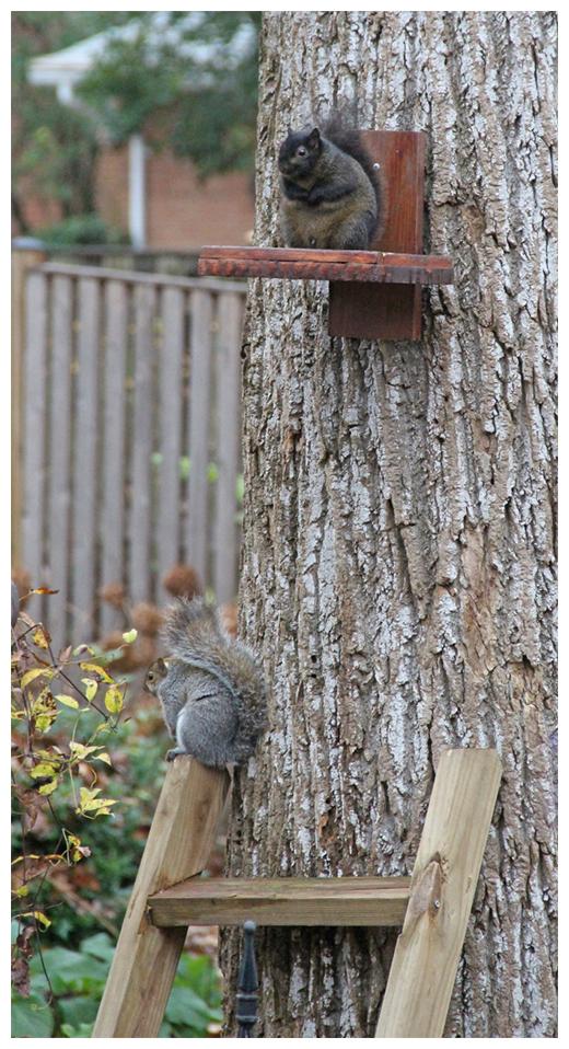 Bird and squirrels