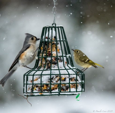 Titmouse And Kinglet At The Bird Feeder