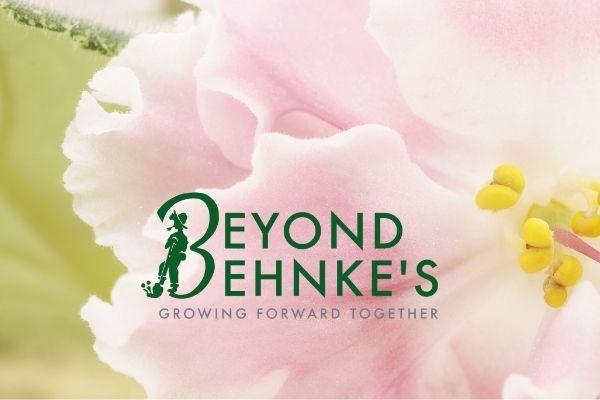 Beyond Behnke's Pink African Violet Logo