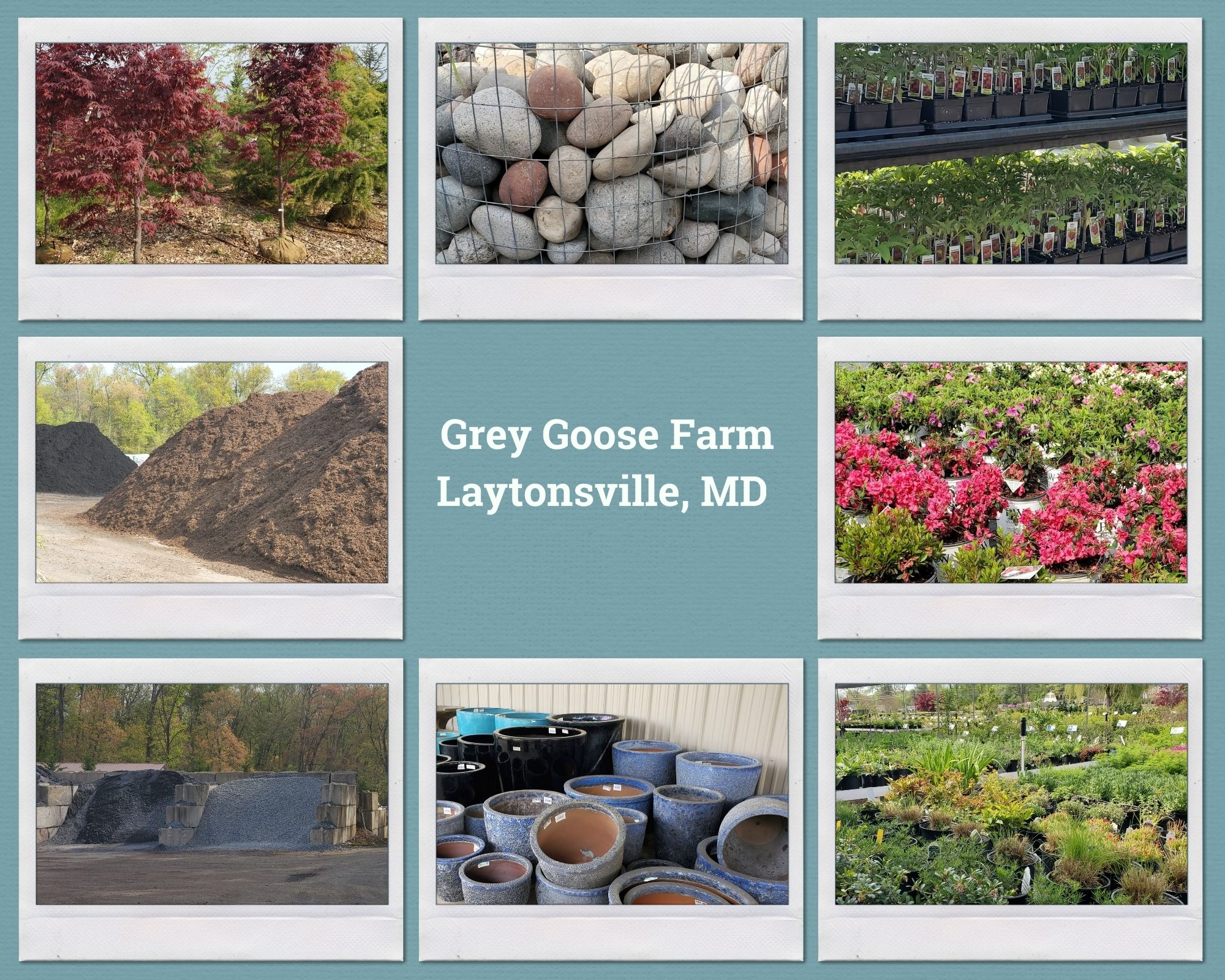 Pictures Of Grey Goose Farm In Laytonsville, Maryland