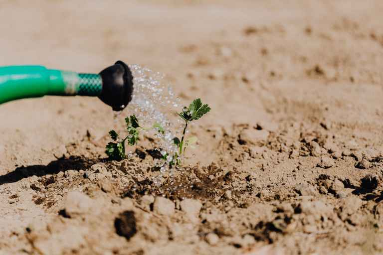 watering a seedling