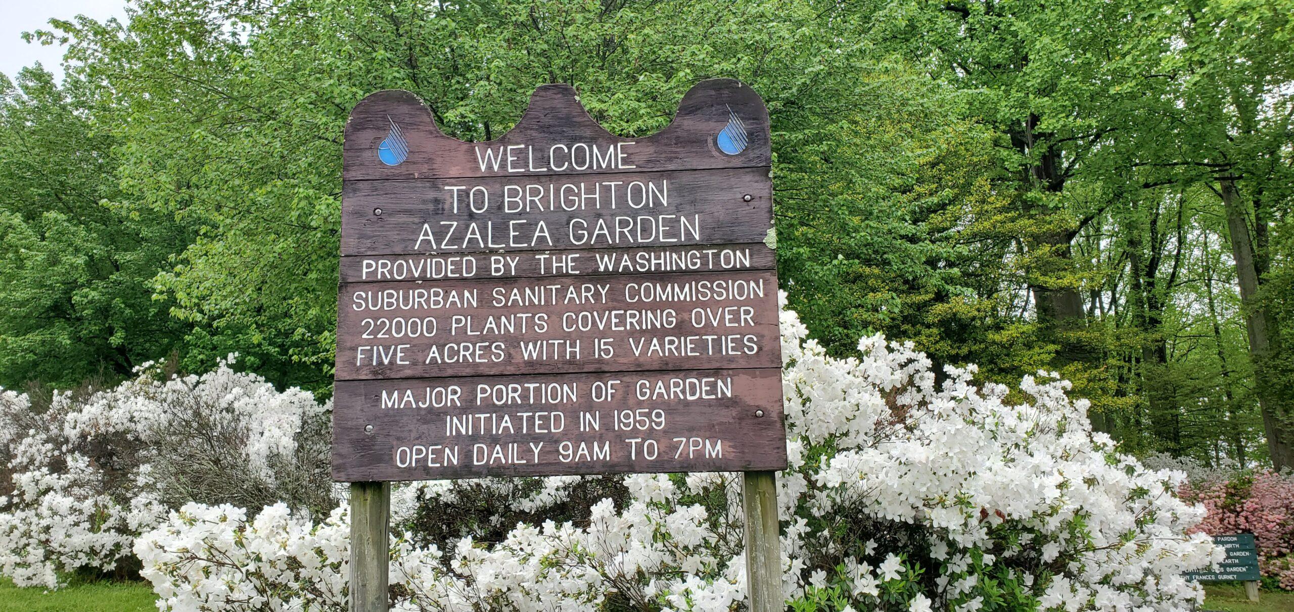 Brighton Dam's Azalea Garden Welcome Sign
