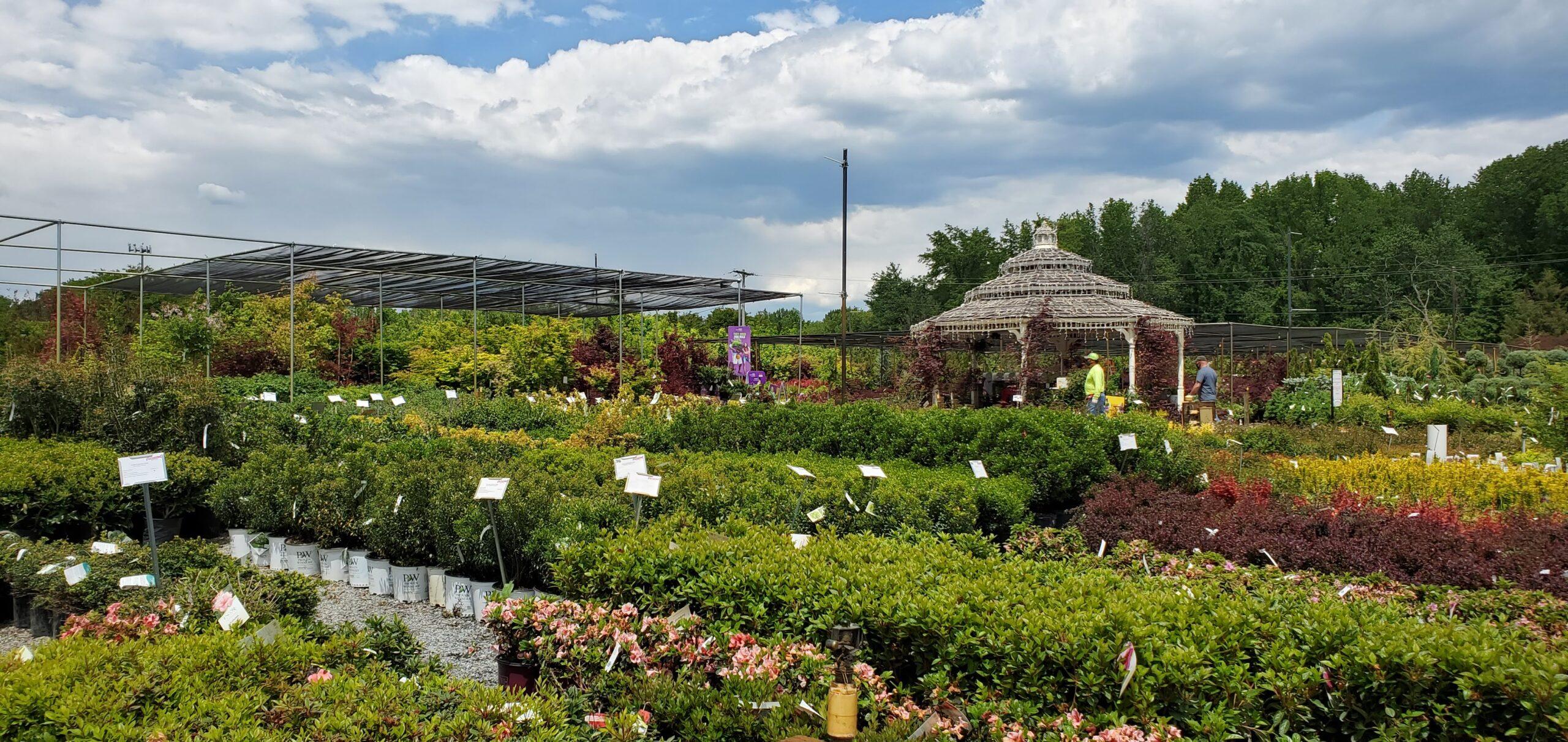 Patuxent Nursery Woody Plant Area