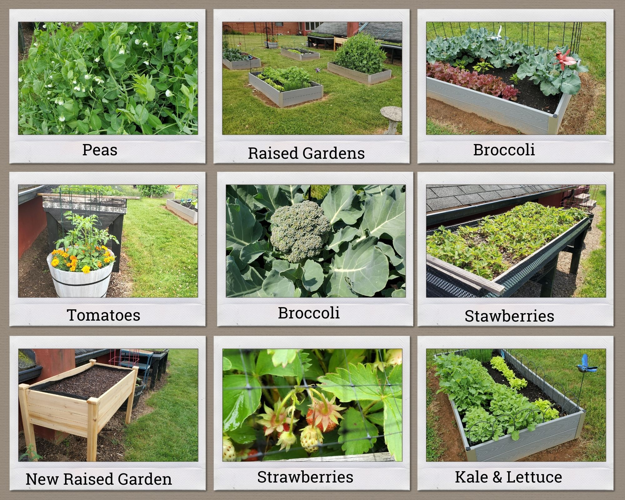 Pictures Of Raised Vegetable Garden Beds