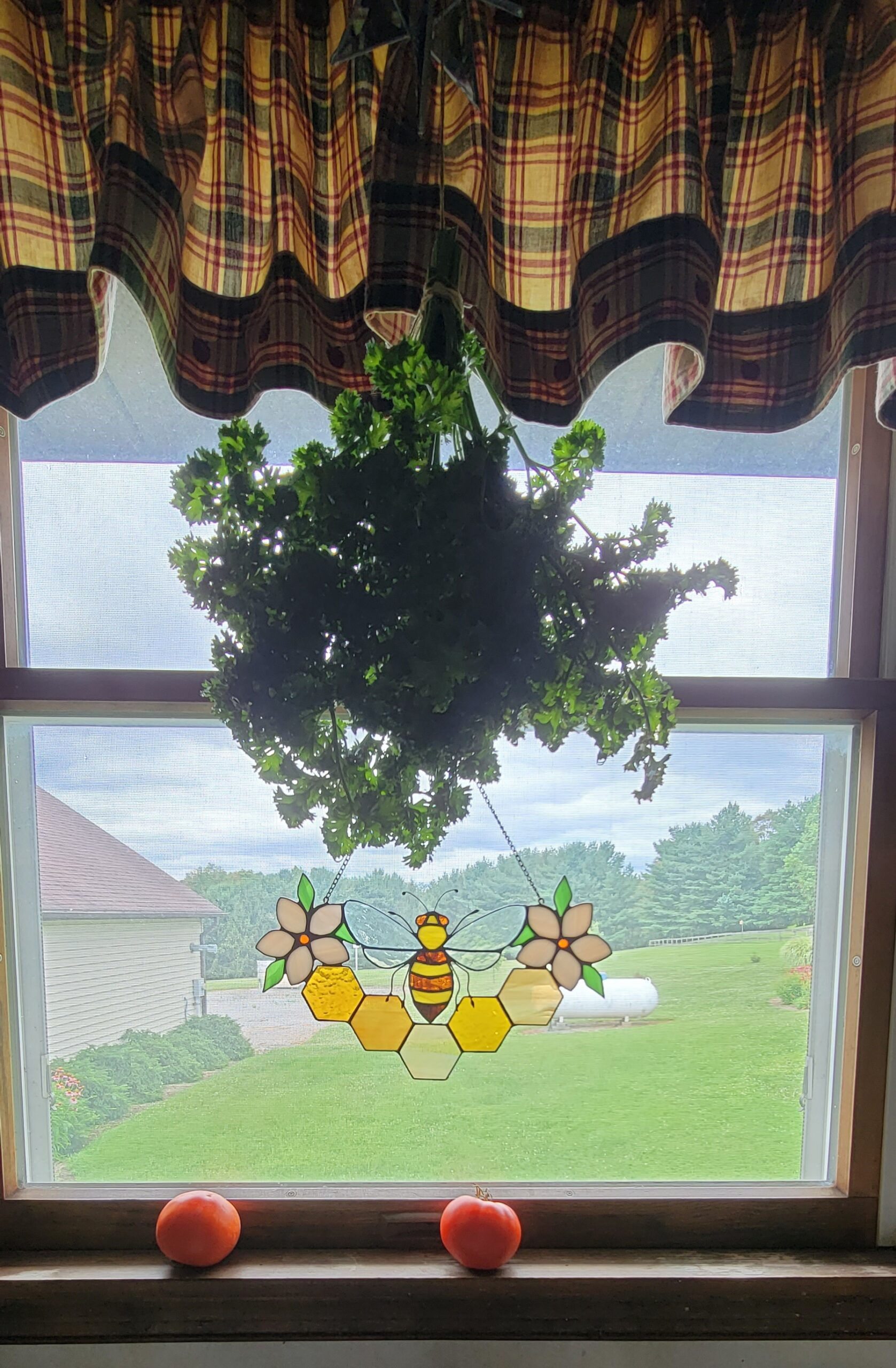 Drying Parsley In Kitchen Window
