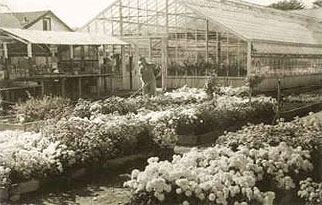 Greenhouse about 1950-1955