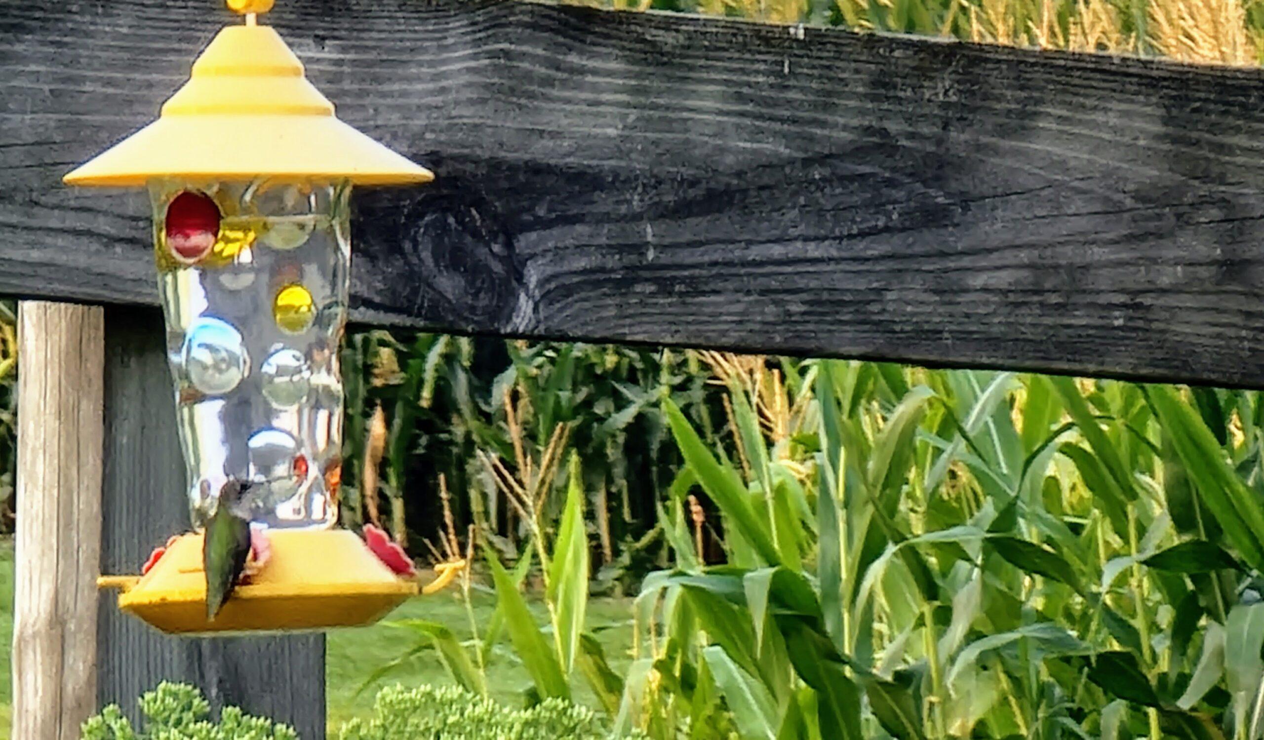 Hummingbird On A Feeder