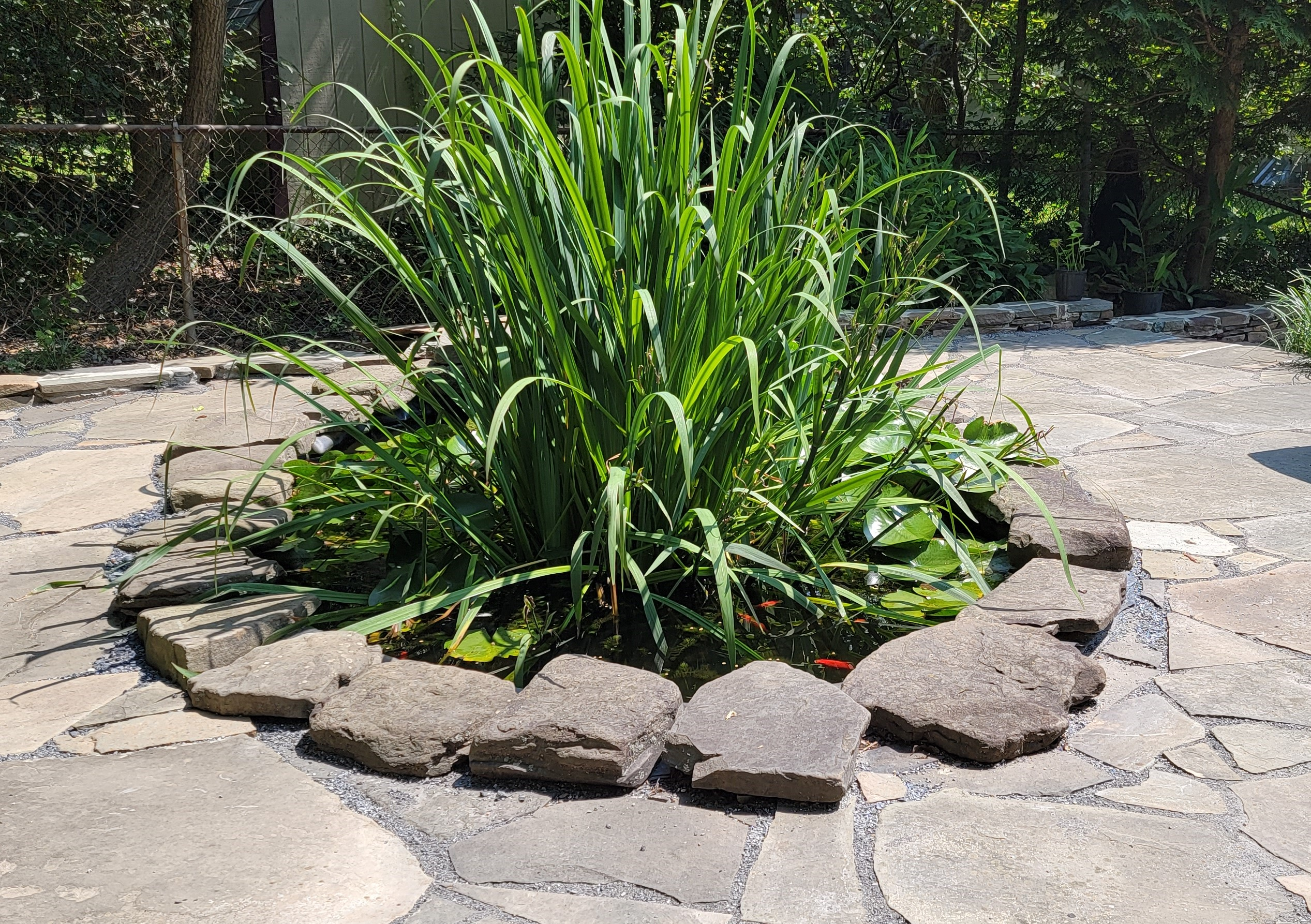 Zabrene Scapes Cantwell's Fishpond